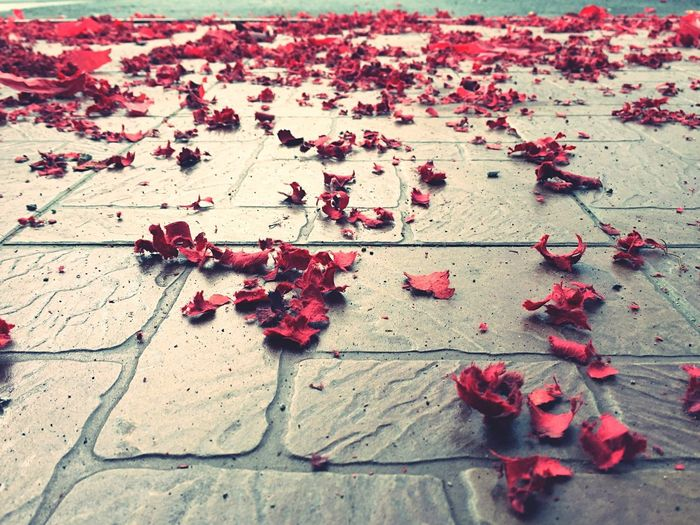 High Angle View Of Red Confetti On Footpath