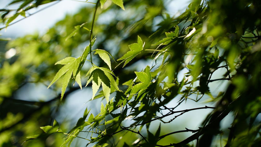 Japan Kagoshima Beauty In Nature Branch Close-up Day Freshness Green Color Growth Leaf Nature No People Outdoors Plant Tree Leafs 活著 記憶 New Life Cooling  Rest Resting Time