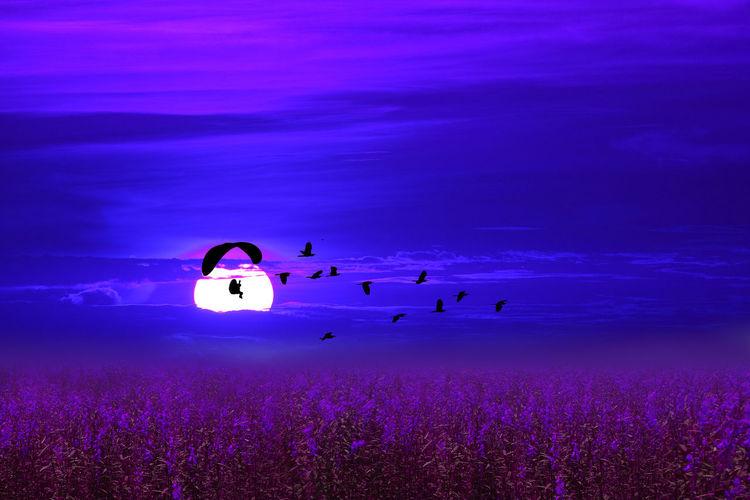 Silhouette of birds flying against blue sky