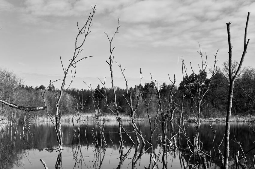 lost place part 12 The Secret Spaces Lostplaces Exploring Blackandwhite Photography Black And White Lucky's Monochrome Monochrome Melancholy Water Reflection Lake Mood Lucky's Mood Dead Trees Shootermag Fine Art Photography Exceptional Photographs Beauty In Nature Fragility Tranquil Scene Calm Landscape Sky And Clouds Melancholic Landscapes