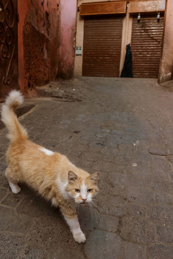 Marrakesh Marrakech Morroco Mammal One Animal Domestic Cat Domestic Animals Pets Feline Street Cat Whisker High Angle View Souk Old Town