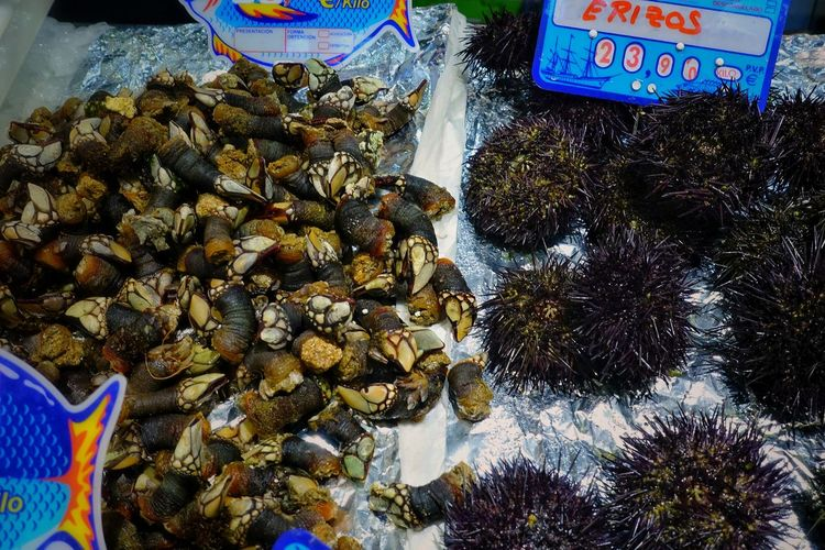 Food Seafood Madrid SPAIN Gourmet Delicious Market Shop Mercado Ocean Sea Urchin Sea Urchins Goose Barnacles Price Tag For Sale Animal Fish Water Retail  Animal Themes Animal Wildlife Abundance Choice Group Of Animals Animals In The Wild Marine No People