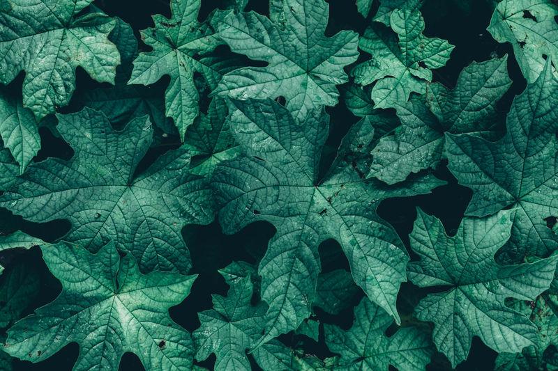 Full Frame Leaf