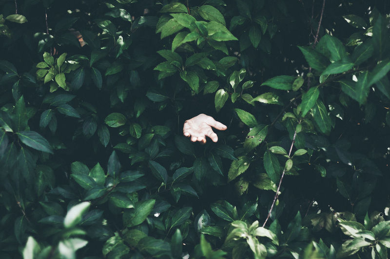 Cropped Hand Amidst Plants