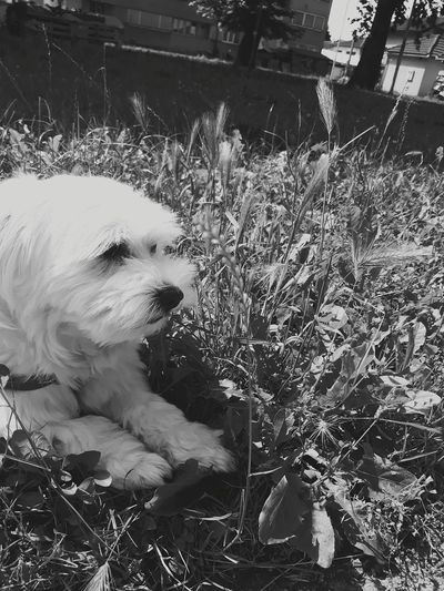 Puffy :) Pets