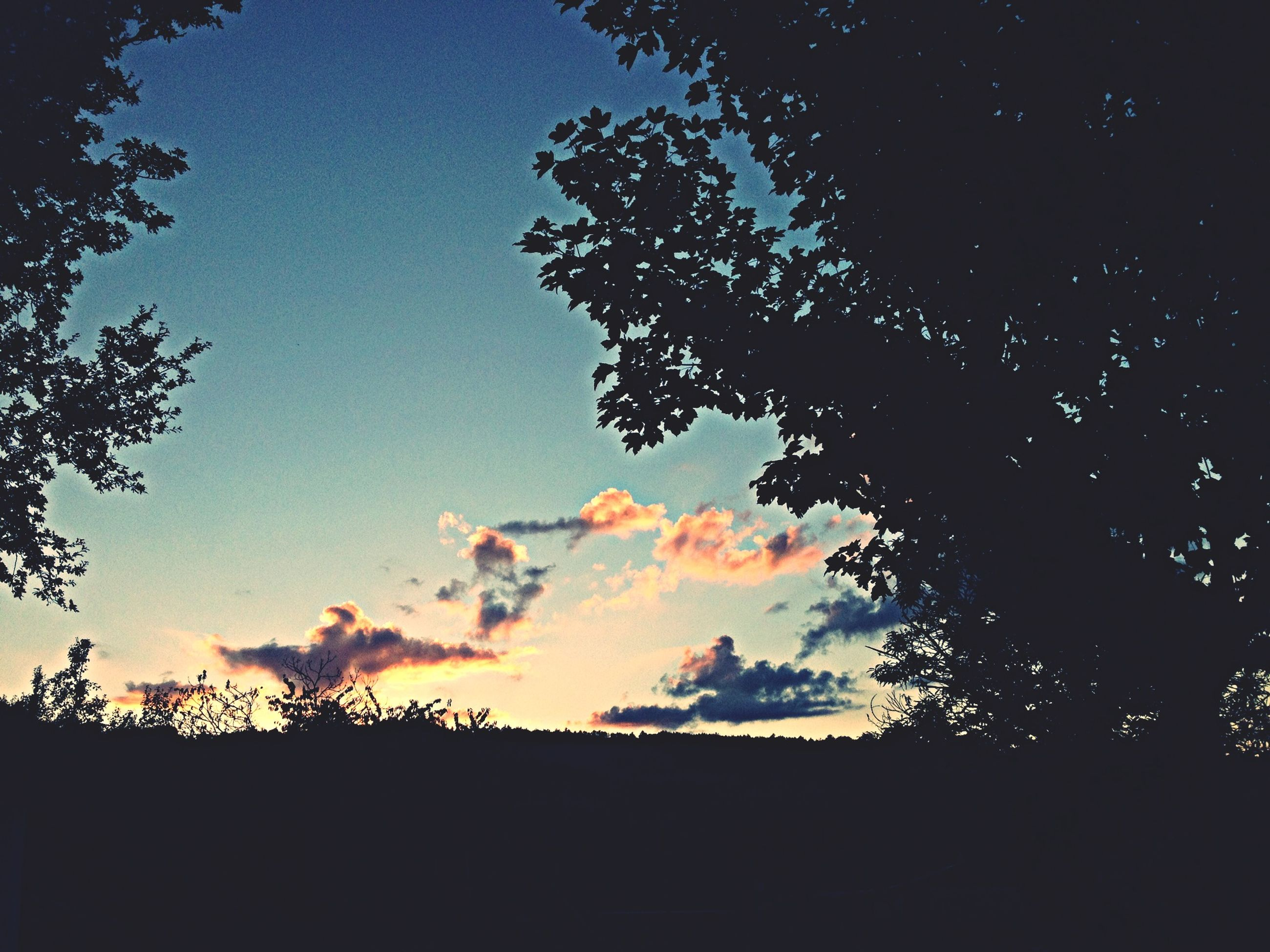 silhouette, tree, beauty in nature, sunset, sky, tranquility, tranquil scene, scenics, nature, growth, low angle view, copy space, landscape, outdoors, idyllic, field, no people, dusk, dark, orange color
