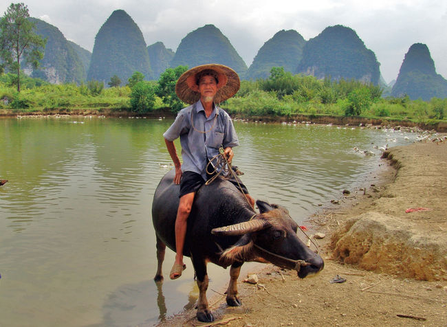 Animal Themes Animals China China Photos China View Domestic Animals Li River Outdoor Photography Outdoors River Wasserbüffel Animal People Water Water Buffalo New Talents