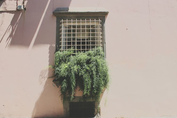 Plant Window No People Outdoors Architecture Day Nature Italy Pisa Live For The Story The Week On Eyem Close-up