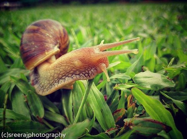 Really I loved my OnePlusTwo mobile cam... It's simply AWESOME... :* :) (y) Natureaddict Earthpix Natgeo Dream_image Awesomeearth Globaldaily Wonderful_places Fellowphoto Ig_masterpiece Splendid_shotz World_captures Igs_asia Ig_india Worldbestgram Phototag_it Lonelyplanetindia Sreerajphotography India Oneplusonephotography Oneplusone India Photographysouls Sreeraj Focuznshoot Technopark technoparkcricketground