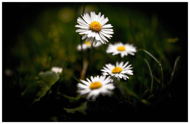 Flower Flowering Plant Freshness Fragility Vulnerability  Plant Petal