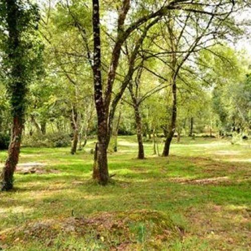 Bosque da Fervenza , Lugo