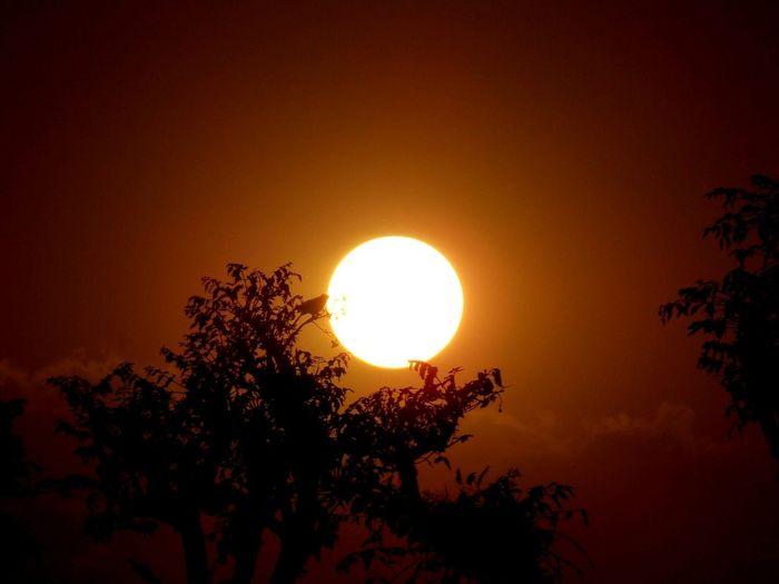 Light And Shadow Birdontree Sunsetlover