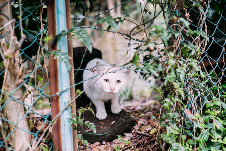 Portrait of cat seen from chainlink fence in yard