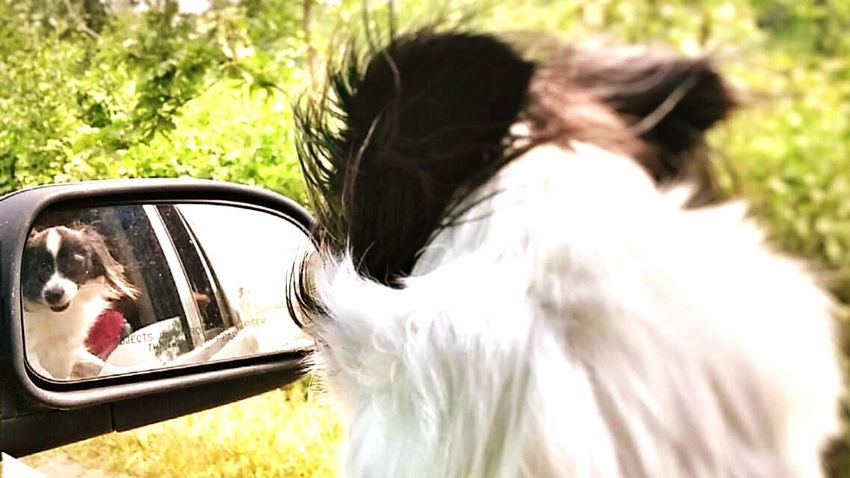 Mydogsarecoolerthanyourkids My Dogs Beautiful Girl Lookatthatface Lookatme Pet Portraits