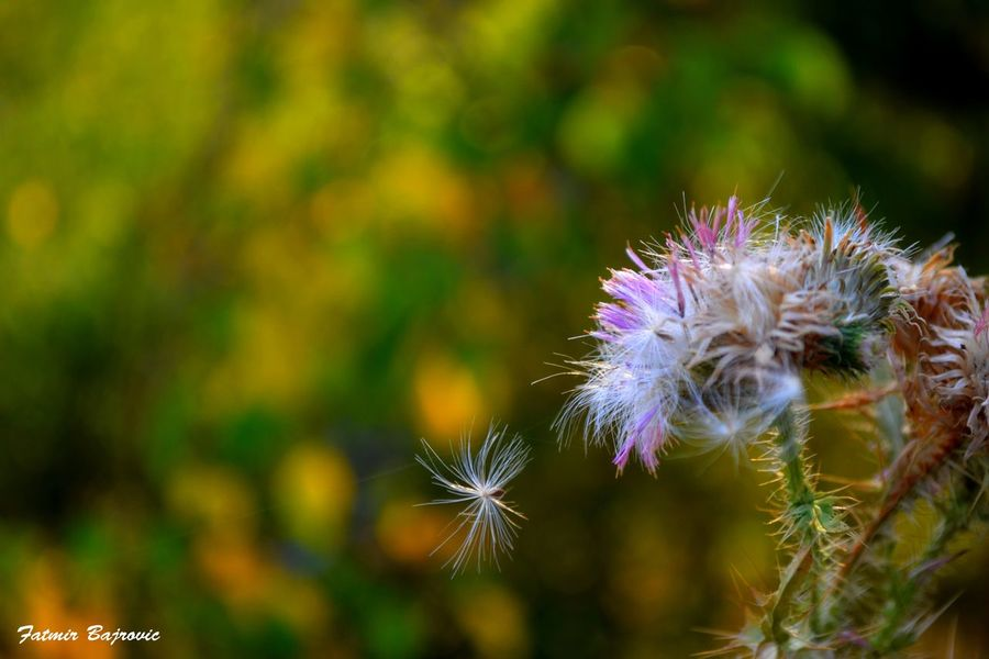 On a spider network Beauty In Nature Blooming Close-up Day Flower Flower Head Focus On Foreground Fragility Freshness Growth Nature No People Outdoors Pink Color Plant Purple Selective Focus Spiked Stem Thistle