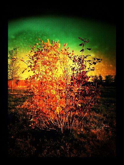 Trees Eye Em Nature Lover Tree Love
