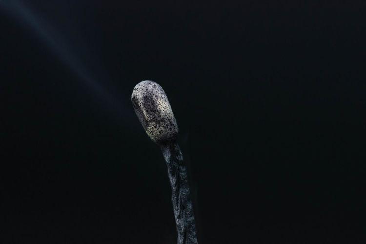 Close-Up Of Burnt Matchstick Against Black Background