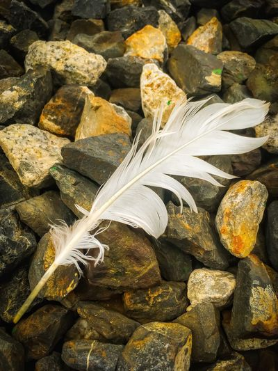 High angle view of feather on rocks