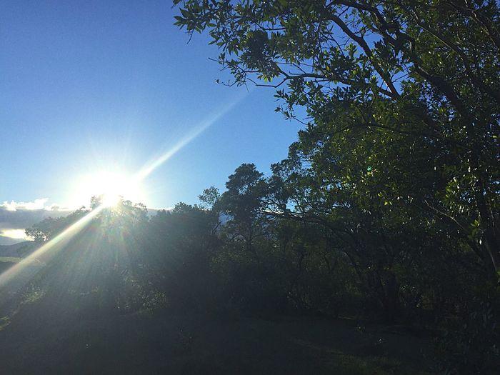 Sunbeam Nature Beauty In Nature Sunlight Sun Scenics Outdoors Eye4photography  Africa Safari