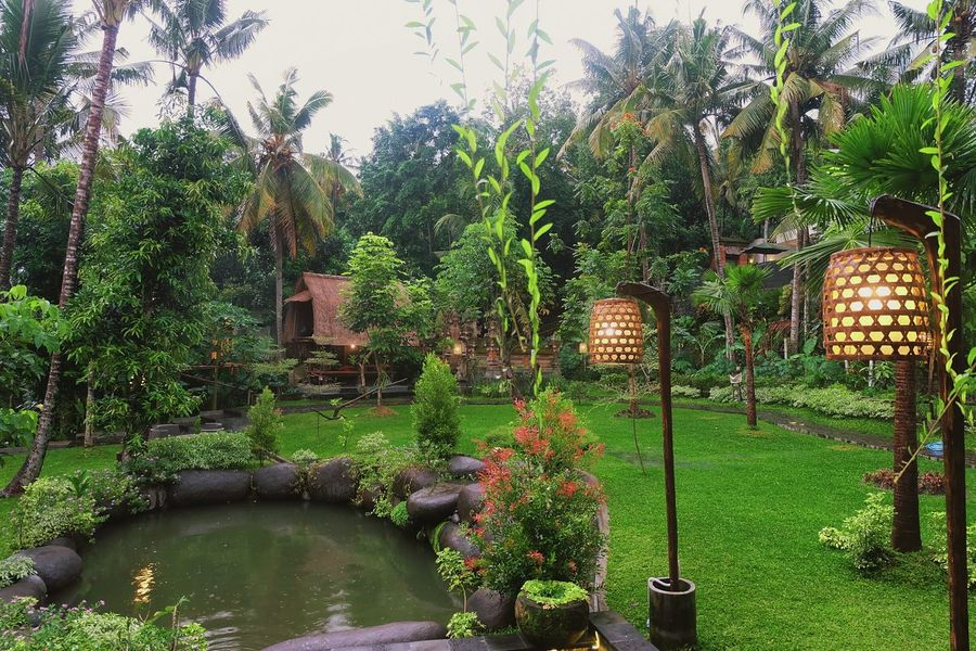 Garden at The Artini Resort, Ubud Nature Outdoors Green Color Beauty In Nature Travel Vacations Tourist Resort Travel Destinations Hotel View Garden Photography Fotography Hotelview Hotel Hotels And Resorts Resort Hotel Ubud, Bali Holiday - Event Beauty In Nature Landscape Pond, Pool, Tarn, Reservoir, Slough, Lagoon, Water, Waterhole, Watering Hole, Inland Sea Breathing Space