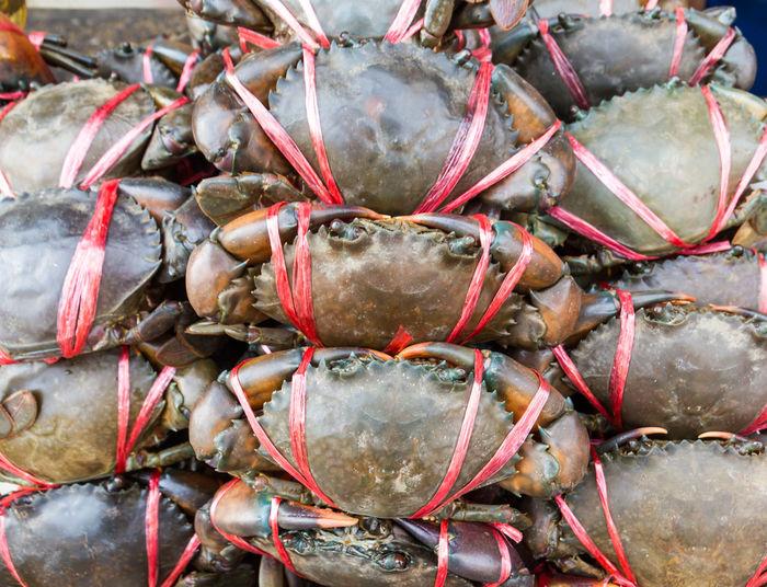 Fresh raw black crab or giant mud crab in fresh market for sale
