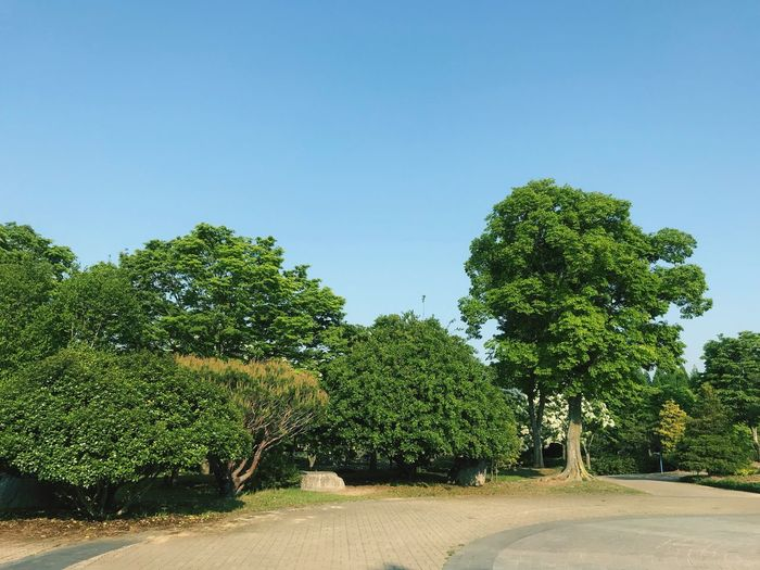 Landscape Trees And Sky Trees Bush Park Plant Sky Tree Nature Clear Sky Growth Day Green Color Beauty In Nature Tranquility Outdoors Tranquil Scene No People