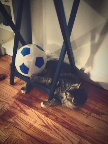 Soccer With Cat