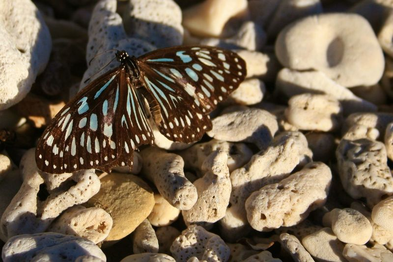 Close-up of butterfly on beach