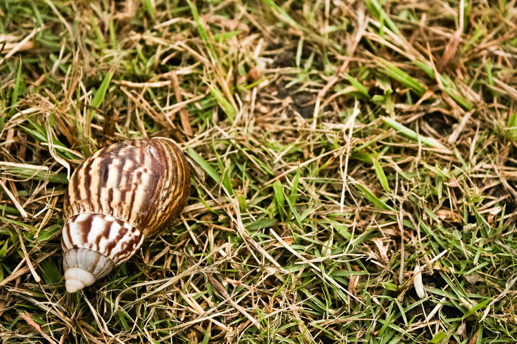 Animal Themes Animals In The Wild Backgrounds Close-up Day Death Fragility Gastropod Nature No People One Animal Outdoors Snail Snail Shell