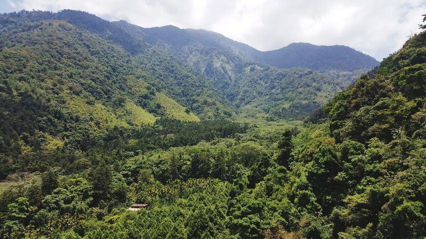Tree Mountain Tea Crop Forest Pinaceae Pine Tree Sky Landscape Mountain Range