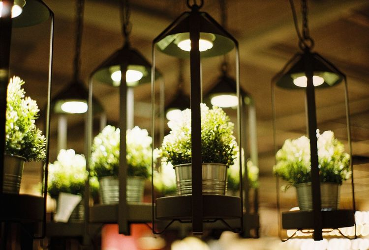 'The green hourglass' Built Structure Architecture Plant Lighting Equipment No People Indoors  Illuminated Nature Glass - Material Light