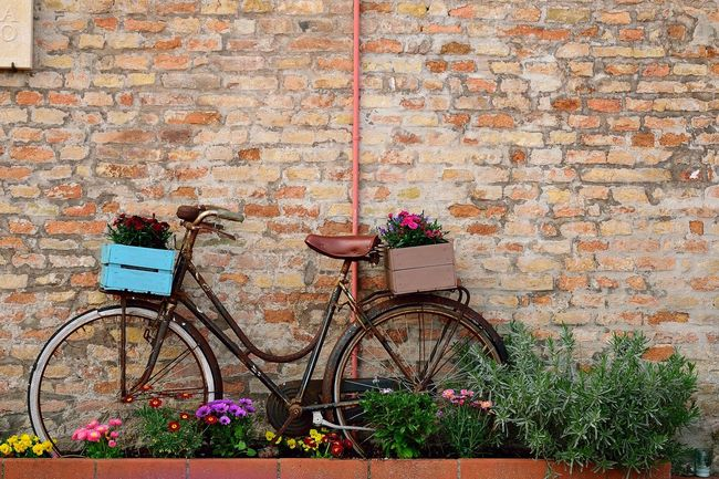 Nikond5300 Bertinoro Flower Bicycle Architecture