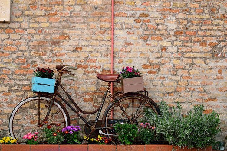 Nikond5300 Bertinoro Flower Bicycle Architecture