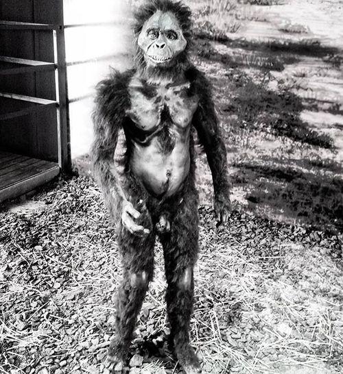 Tecnopolis Argentina Buenosaires Arte Rastasmgph Monos Homosapiens Monkey