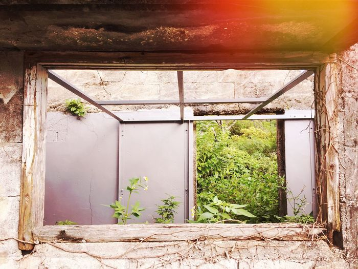 Ruined Ruins Decay Growth Plant Window Architecture No People Built Structure Day Nature Outdoors Snap Photooftheday 세계 沖縄 Okinawa The Week On EyeEm Mix Yourself A Good Time IPhoneography Photogenic  浜比嘉島 EyeEmNewHere Growth Beauty In Nature