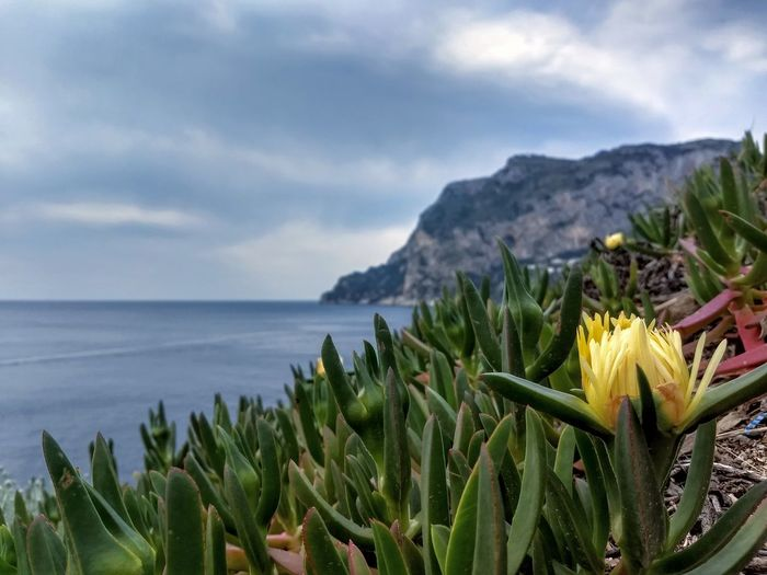 Close-up of flowering plants by sea against sky