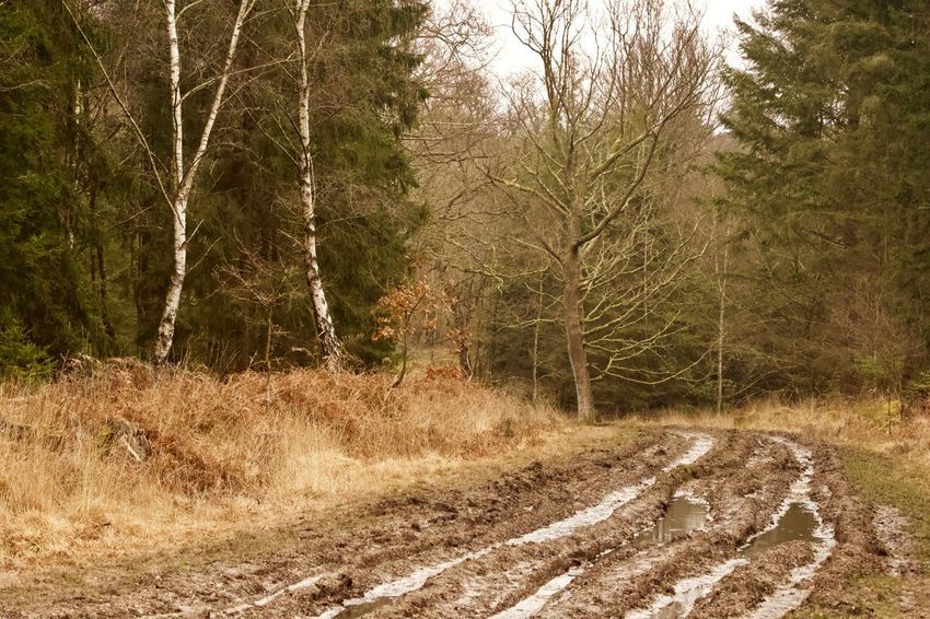 Tough route Trees Tree Mud Ruts Water Ruts Muddy Mud Tree Plant Land Nature Growth No People Forest Day Tranquility Beauty In Nature Non-urban Scene Outdoors Tranquil Scene Scenics - Nature The Way Forward