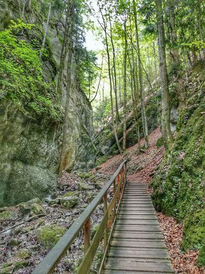 In der Klamm HDR Optimized Tree Footbridge Forest Railing Green Color Countryside