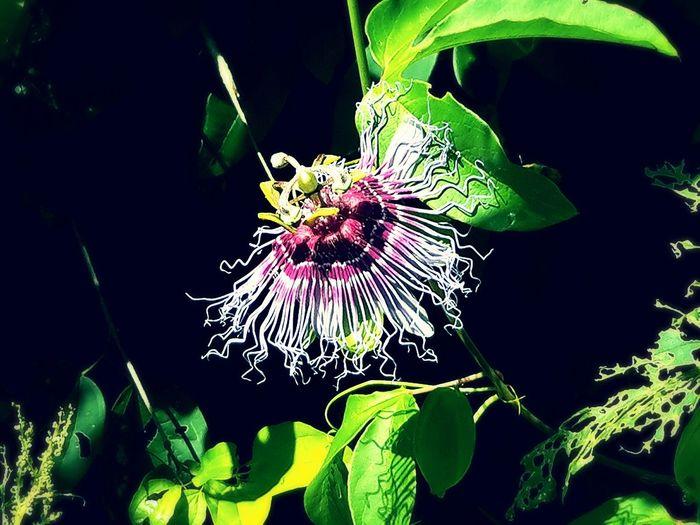 Theflower Feeling Thankful Feeling Blessed EyeEm Best Shots Nature Eye4photography  Eyes Never Lie