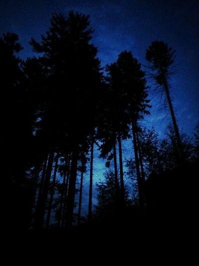 Abend Dämmerung im Wald ... Nature One