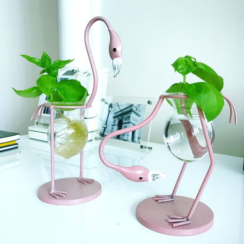 Lifestyles White Background Herb Plant Home Decoration Freshness Propagation Flamingo Container Gardening
