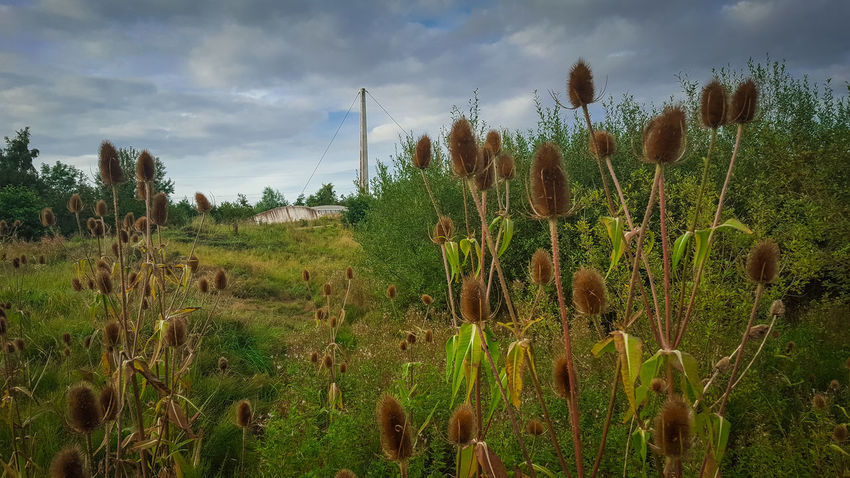 Beauty In Nature Cactus Cloud Crop  Day Field Green Color Growth Landscape Nature Non-urban Scene Outdoors Plant Plant Life Rural Scene Scenics Sky Succulent Plant Tall - High Thistle Thorn Tranquil Scene Tranquility Tree Uncultivated
