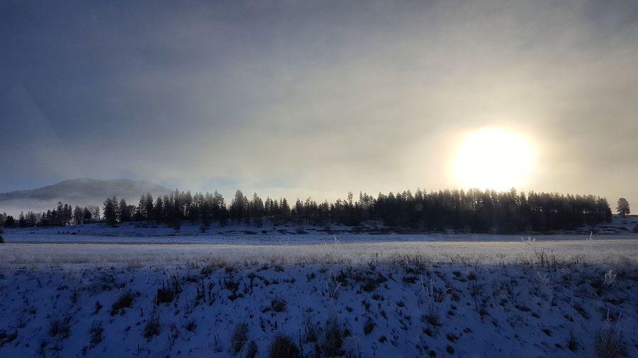 Tree Frozen