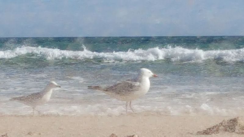 Seagulls Seaspray Ocean Sea Water Wind Sand & Sea Sand Australian Photographers Android Photography Photography Themes Beach Ocean View Seascape Photography Ocean Photography No People Outdoors Nature Rockingham Sky Blue