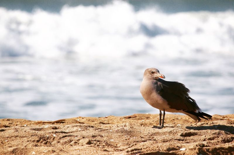 Alertness Arid Climate Auto Post Production Filter Balance Beach Beauty In Nature Bird Cloud Cloud - Sky Cloudy Dusk Nature No People Outdoors Relaxing Sand Sea Sky Sunset Zoology Showcase: January