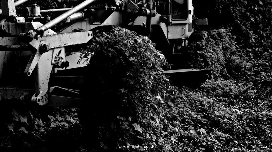 Erosion -侵食- Botanical Fukui Japan 福井 日本 Fujifilm X-E2 Nature