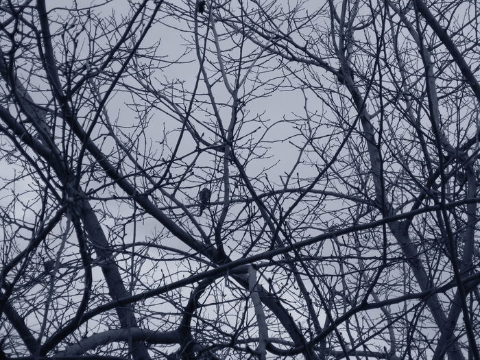 Shades Of Winter Winter Wintertime Day monochrome photography Nature No People Outdoors Sky Tree Winter Bird Winter Dove