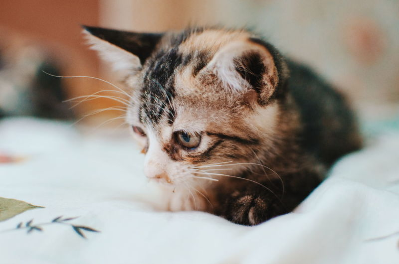 Animal Themes One Animal Close-up Mammal Relaxation Portrait No People Feline Indoors  Day