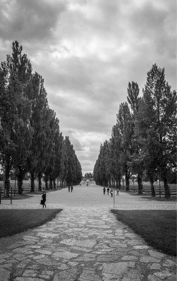 Remembering Cloud - Sky Day History Gedenkstätte KZ Dachau Dachau Tadaa Community World War 2 Memorial Never Forget Geschichte Blackandwhite Photography Blackandwhite Trees Sad Silence Tranquility