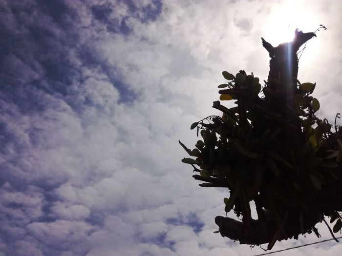 Silhouette Cloud - Sky Sky Sculpture Outdoors Statue Tree Low Angle View No People Day Nature Clouds And Sky Close Up Sky_collection Malaysia Photography